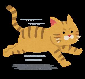 run_cat.png