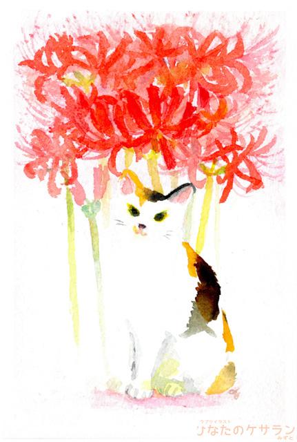 三毛猫と彼岸花