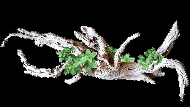 driftwood-2550977_640.png