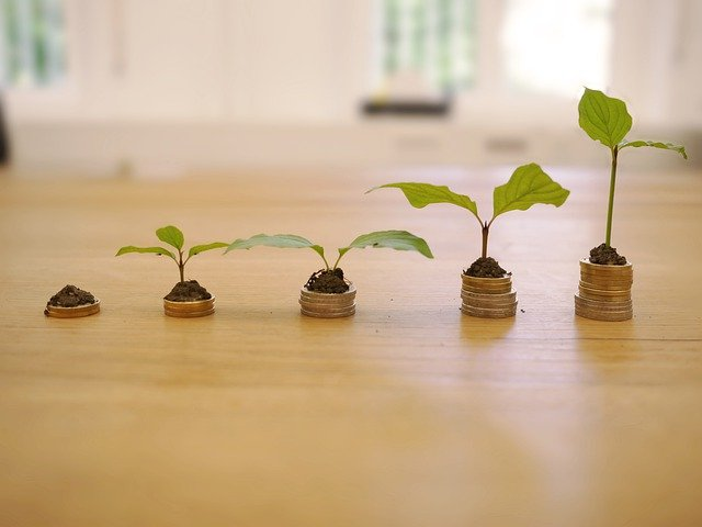 growth-4518406_640.jpg
