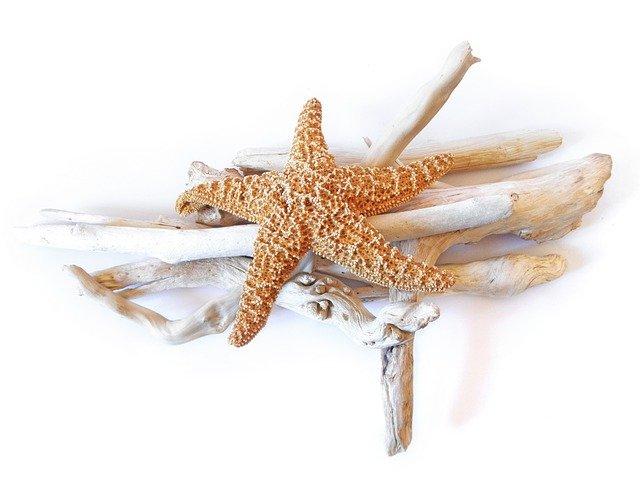 starfish-731464_640.jpg