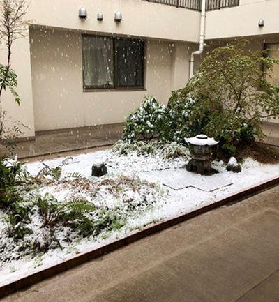 20200406成0329雪化粧②