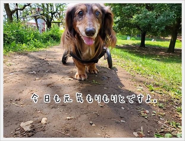fc2_2020-04-26_02.jpg