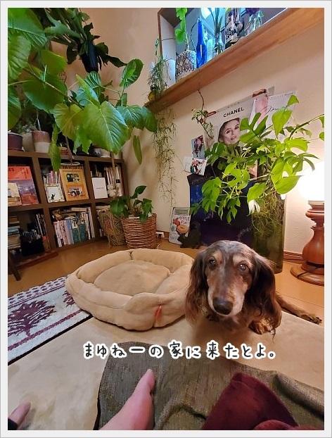 fc2_2020-12-03_01.jpg