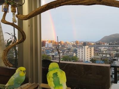 綺麗な虹よりも