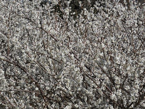 きれぎれの風彩「北本自然観察公園 0224」200315-02