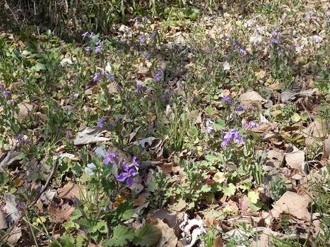 きれぎれの風彩「北本自然観察公園 0224」200315-08