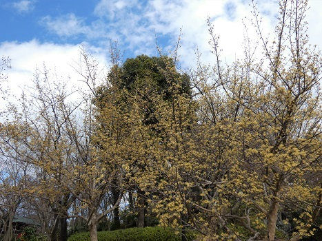 きれぎれの風彩「上尾:丸山公園 0315」200331-05