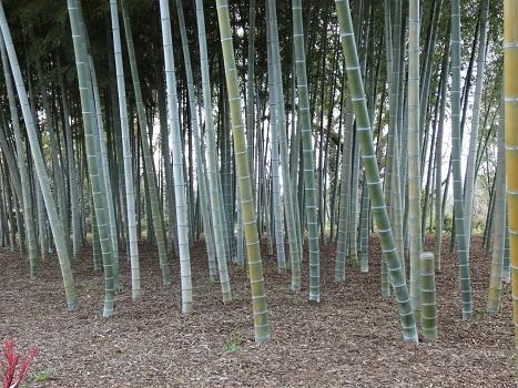 きれぎれの風彩「上尾:丸山公園 0315」200331-09
