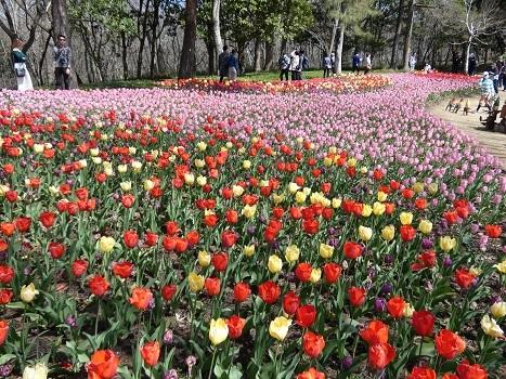 きれぎれの風彩「森林公園 0321」200412-05
