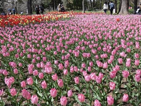 きれぎれの風彩「森林公園 0321」200412-06