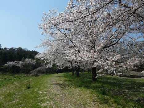 きれぎれの風彩 都幾川桜堤200418_11