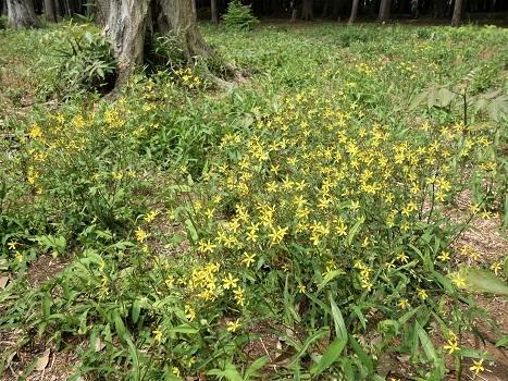 きれぎれの風彩 平塚公園0503-200514_04