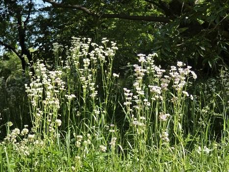 きれぎれの風彩「北本自然観察公園 0514」200524-08