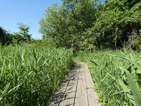 きれぎれの風彩 平塚公園0514-200607_2