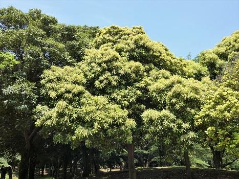 きれぎれの風彩「平塚公園 0607」200630-01