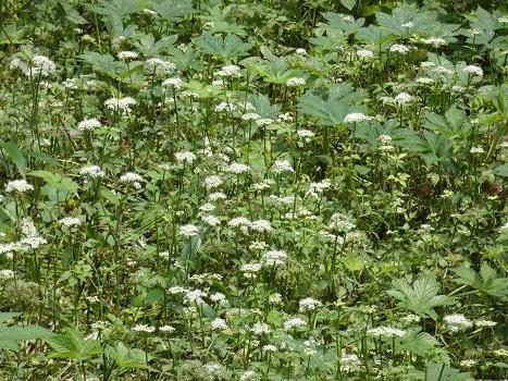 きれぎれの風彩 北本自然観察公園0712-200801-02