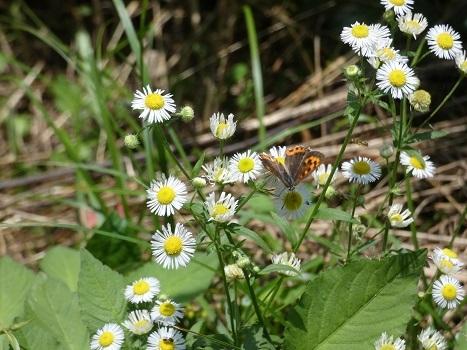 きれぎれの風彩 北本自然観察公園0712-200801-07
