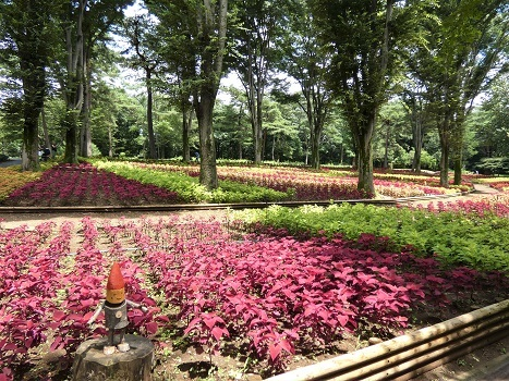 きれぎれの風彩 武蔵丘陵森林公園0801_200830-01