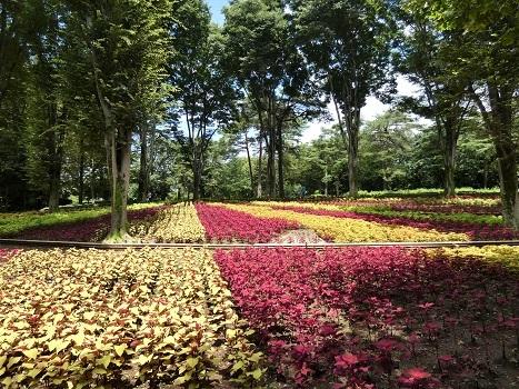 きれぎれの風彩 武蔵丘陵森林公園0801_200830-02