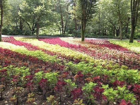 きれぎれの風彩 武蔵丘陵森林公園0801_200830-03