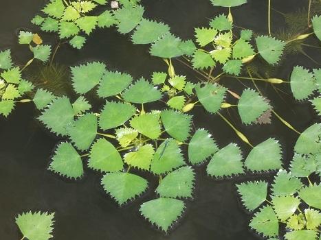きれぎれの風彩 武蔵丘陵森林公園0801_200830-07