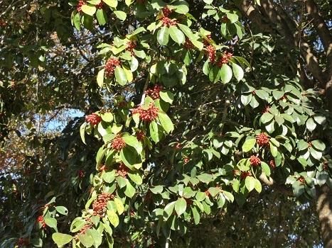 きれぎれの風彩 平成の森公園1122_201213-03