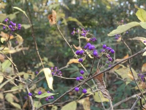 きれぎれの風彩 北本自然観察公園1206_201223-01