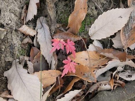 きれぎれの風彩 北本自然観察公園1206_201223-05