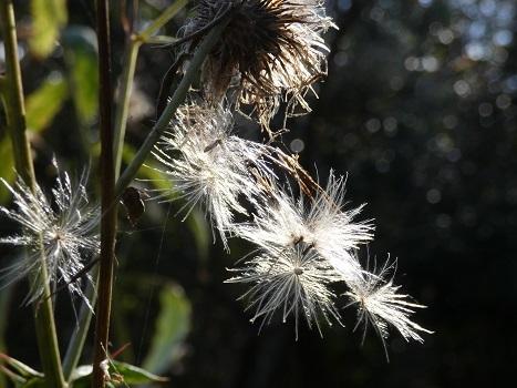 きれぎれの風彩 北本自然観察公園1206_201223-06