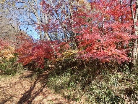 きれぎれの風彩 北本自然観察公園1206_201223-08