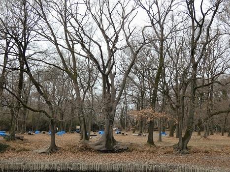 きれぎれの風彩 秋ヶ瀬公園0111_210122-7