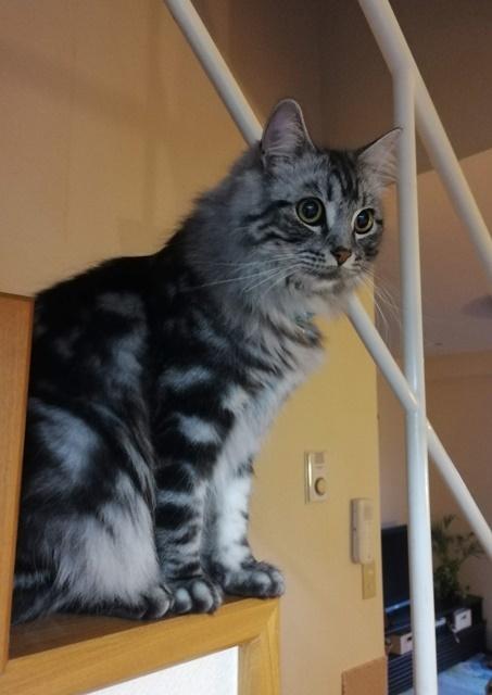 階段に座るレオン2020web