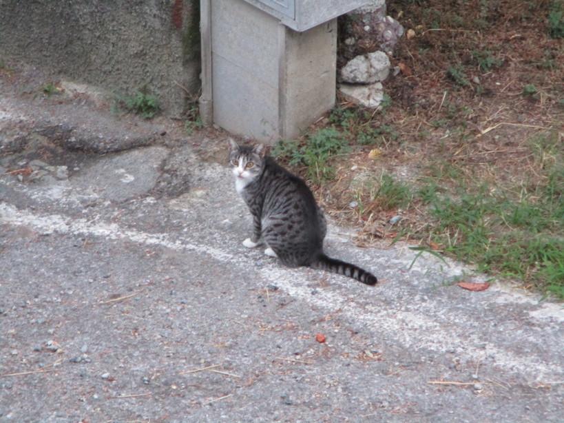 gatto3_200829