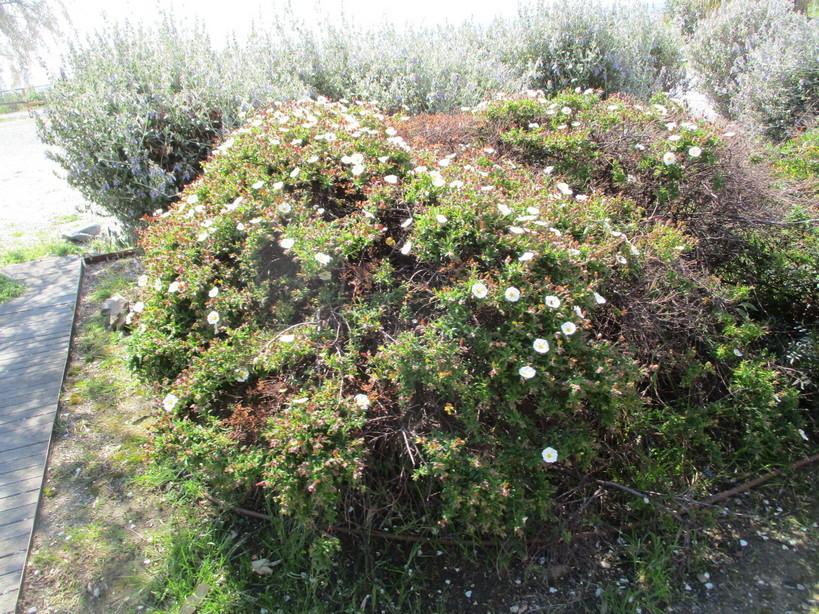 fiori2_210417