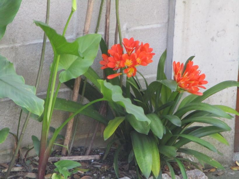 fiori4_210417