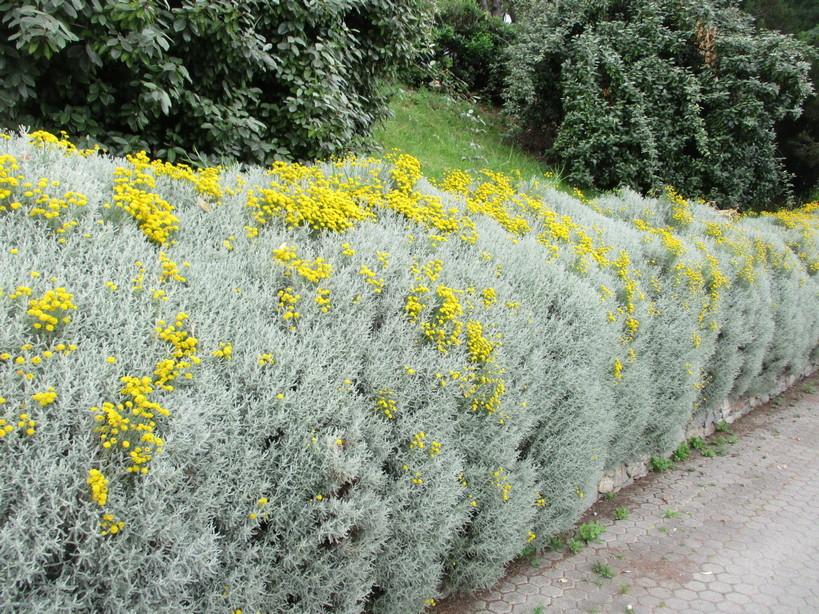 fiori_gialli_in_passeggiata210605