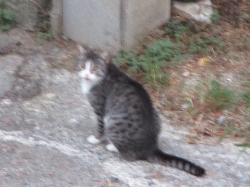 gatto2_200829