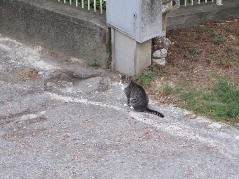 gatto4_200829