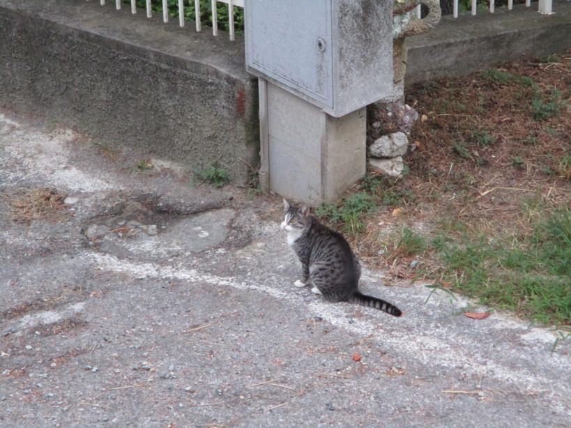 gatto5_200829