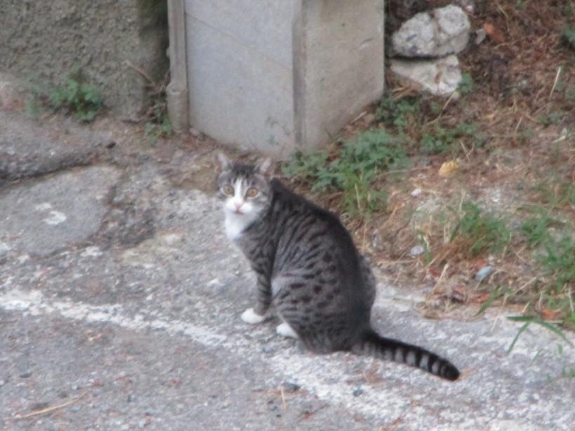gatto6_200829
