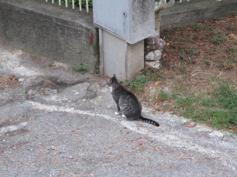 gatto7_200829