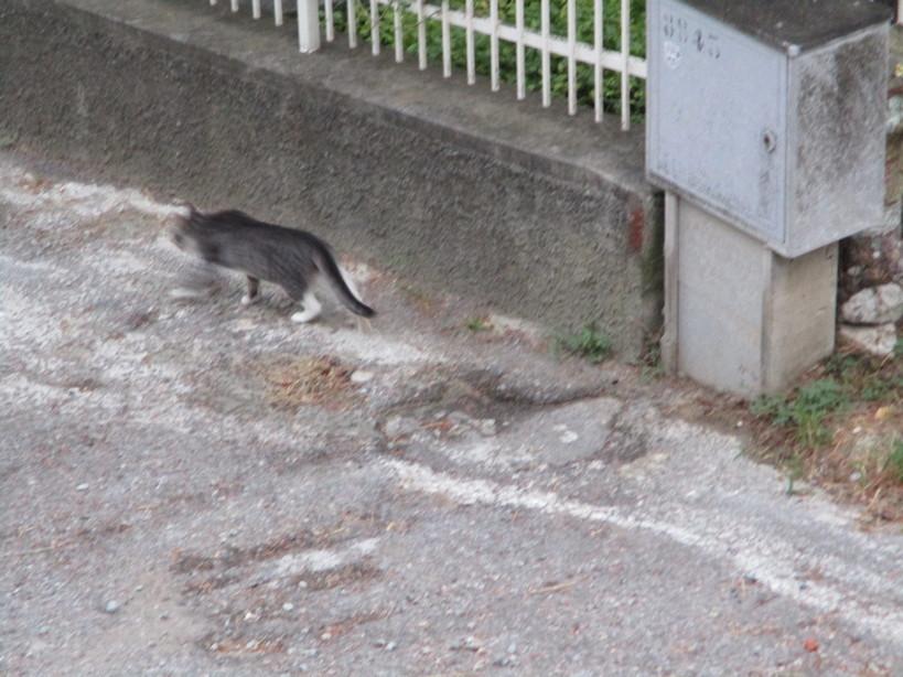 gatto10_200829