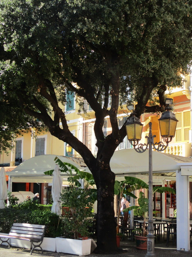 albero_e_lampione2_201121