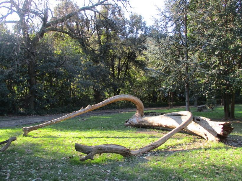 alberi_artistici_parco210116