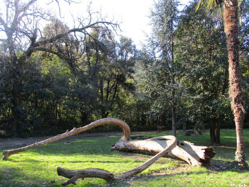 alberi_artistici_parco2_210116