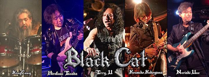 black_cat2.jpg