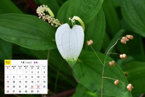 7月カレンダーD7T_5967-1半夏生とコバンソウs