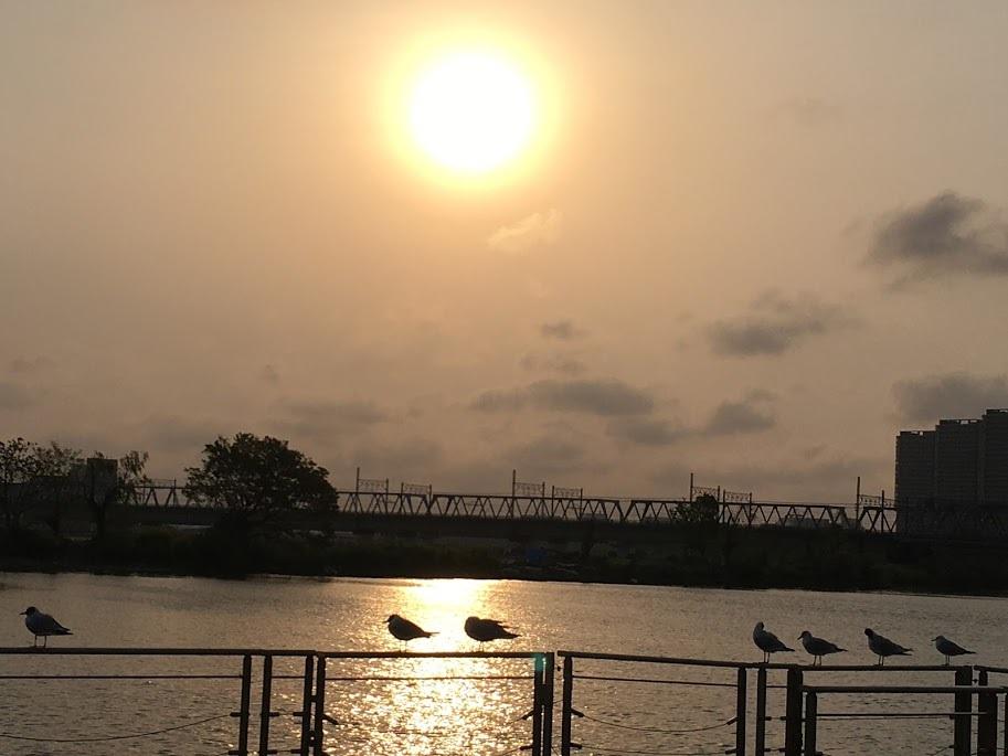 単身生活/多摩川