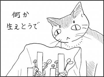 kfc01942-6